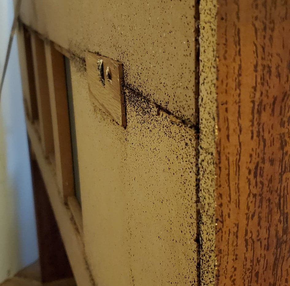 bedbugsonheadboard2.jpg