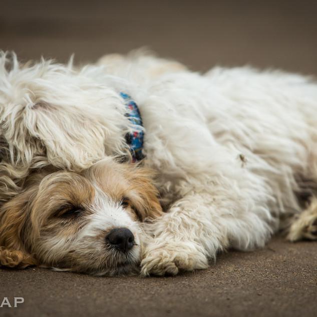 Lovely nap