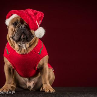 Frenchie Christmas