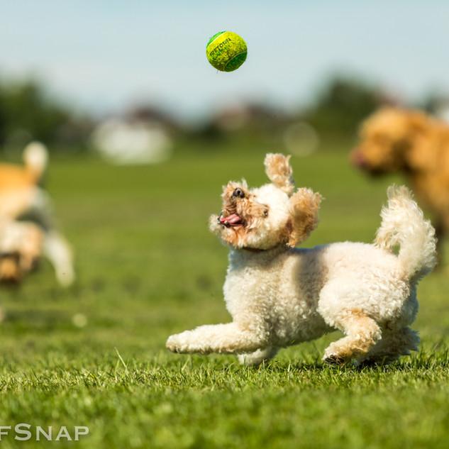 Catch it!