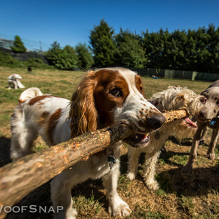 Sharing the stick