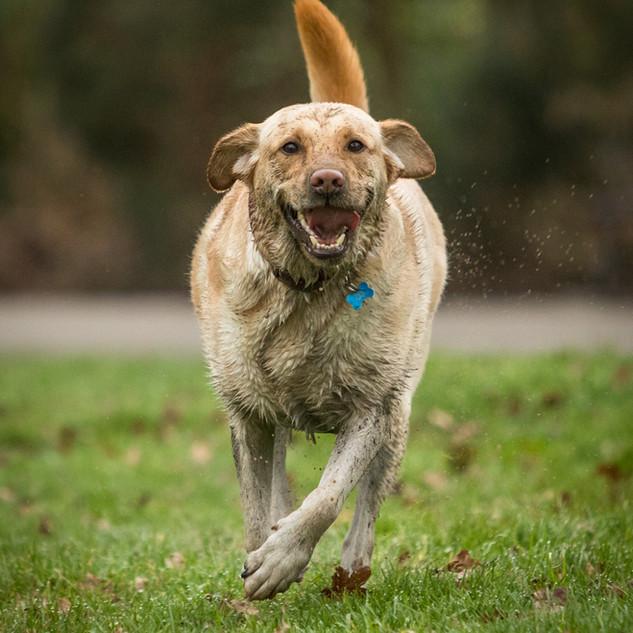 Proudly muddy