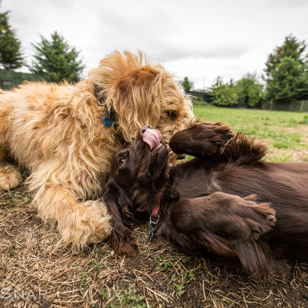 Cuddle Lick