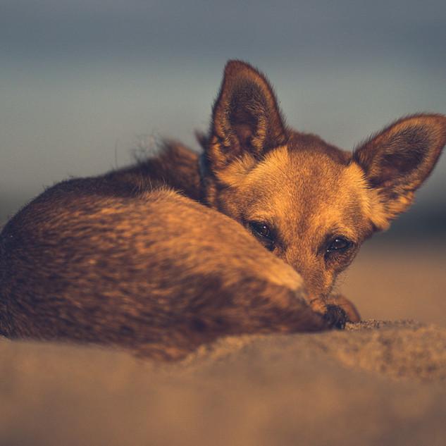 Izzy in the sand