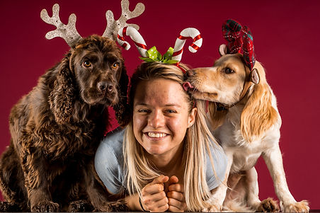 Two cocker spaniels (chocolate and blond) dressed up in Christmas accessories witha blond girl at a dog photoshoot