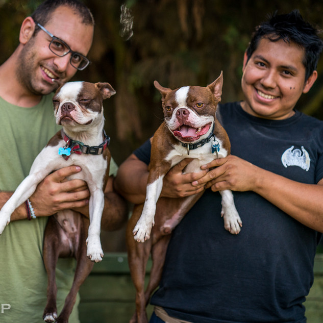 Simone and Manolo with boston terriers