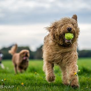 Winner of the ball