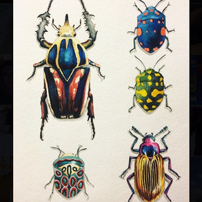 'Beetle Collection' Watercolor 2019