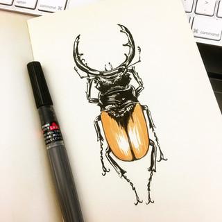Beetle Sketch