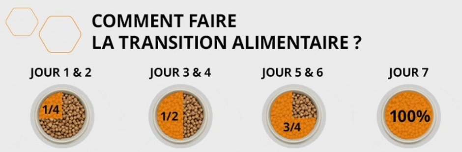 transition croquettes.PNG