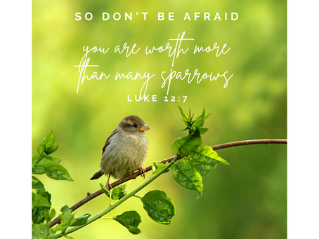 A Little Sparrow and a Profound Truth