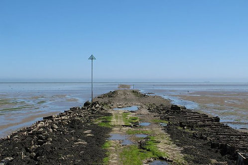 The Broomway - Spring Edition