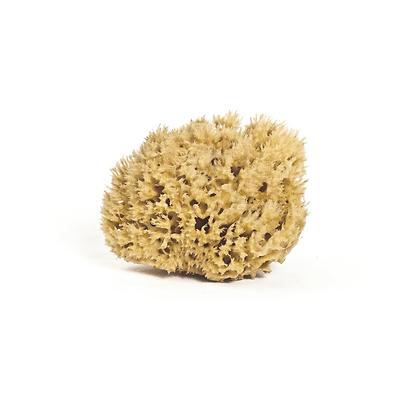 Meeka - Honeycomb Body Sea Sponge