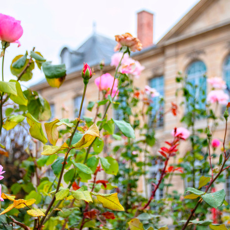 Musée Rodin - An Oasis of Calm in the Midst of Parisian Tumult
