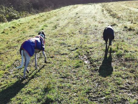 January Sunshine in Cheshire