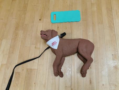 Dog First Aider!