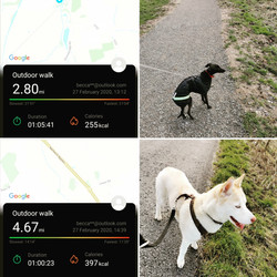 GPS tracked walks