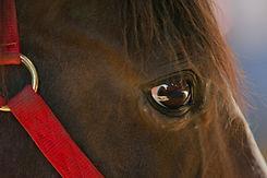 equineassisteddevelopment-0669.jpg