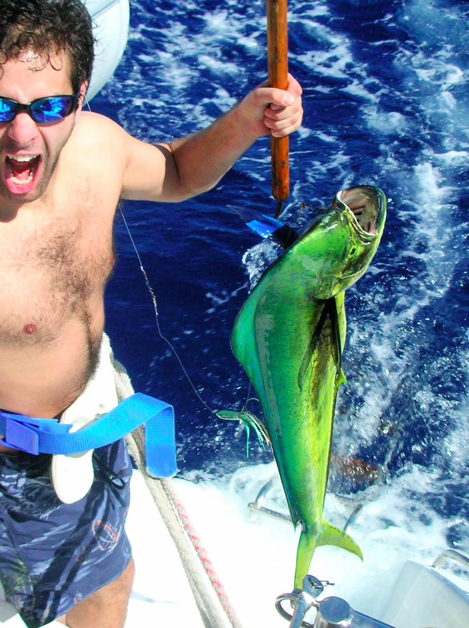Mahi Mahi- Gold Makrel- Dorade
