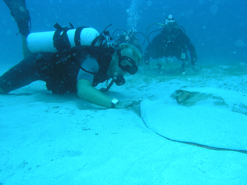 Friendly Stingray in The British Virgin Islands