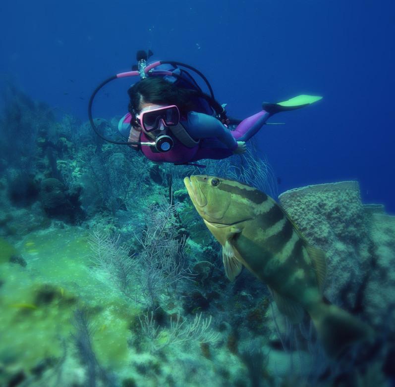 Diving The British Virgin Islands