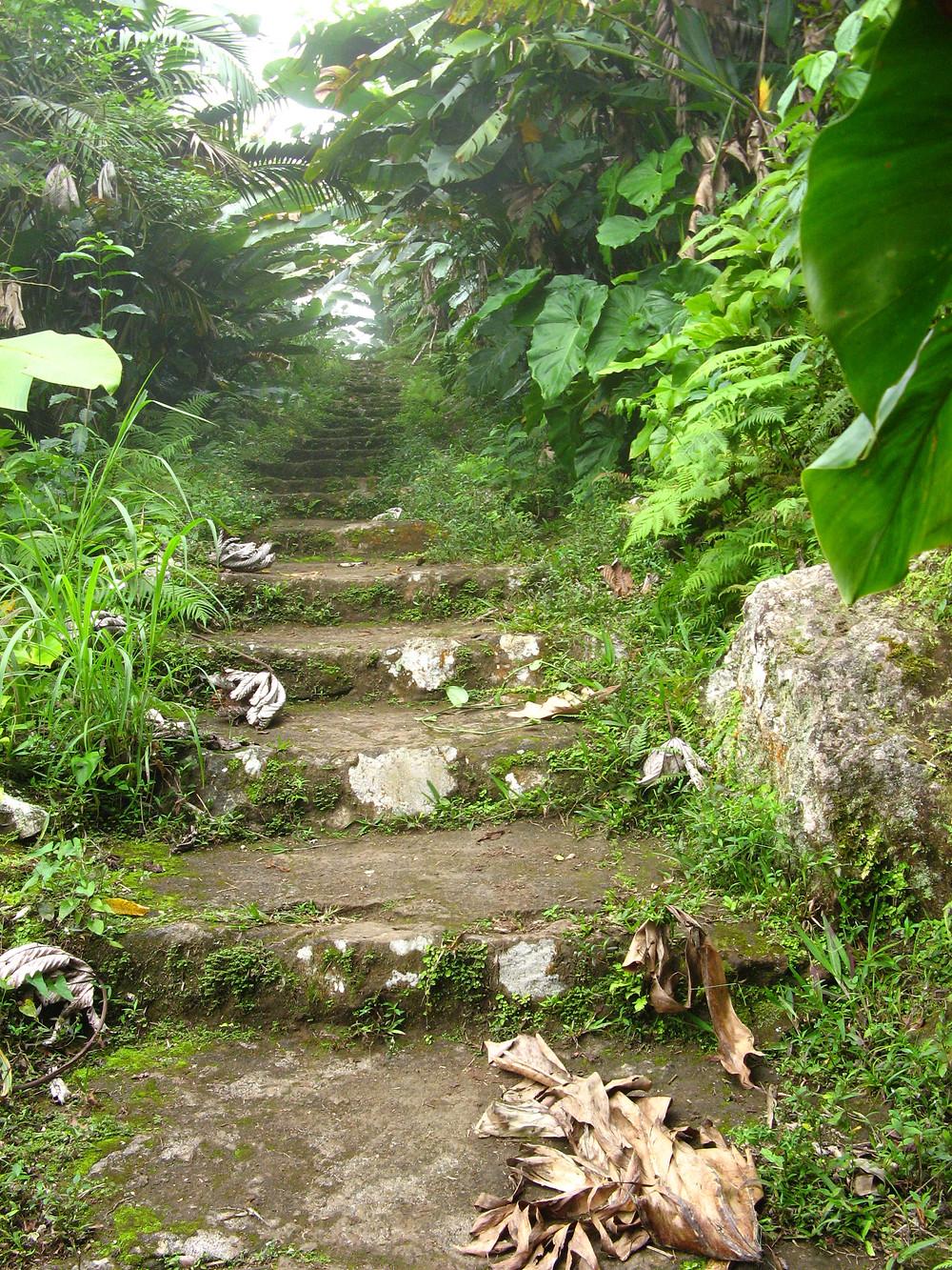Saba Island Rain Forrest