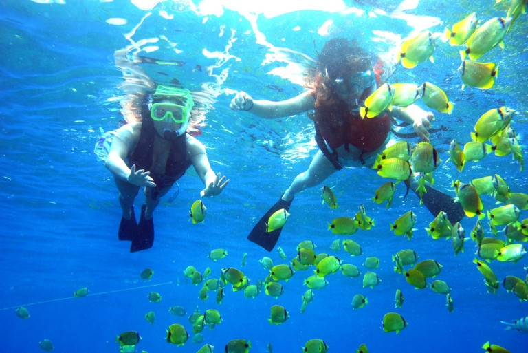 Explore the fish world when snorkeling