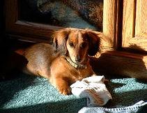puppies_5-17-07_148-308x237.jpg