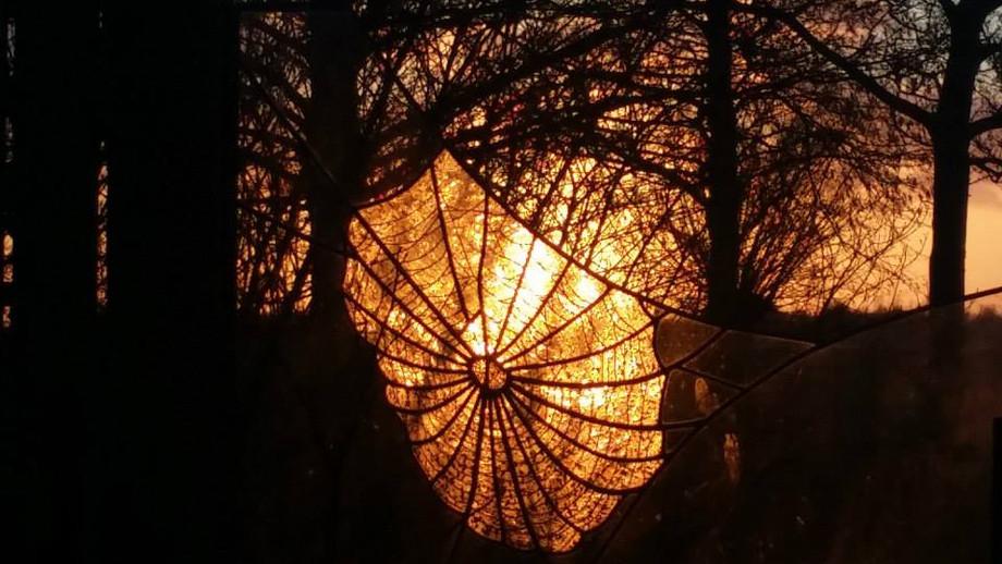Spiderweb 2013