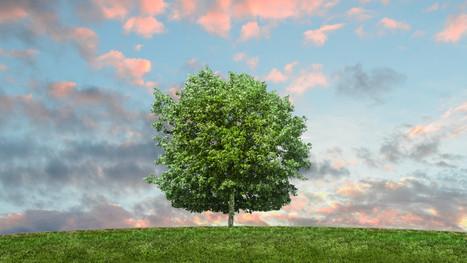 shade tree.jpg