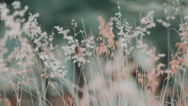 ornamental grass.jpg