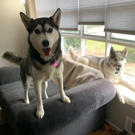 Loki & Freya