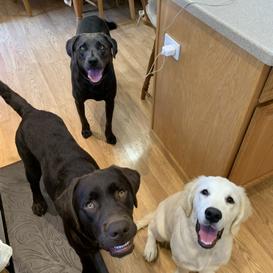 Lexie, Harry & Jackson
