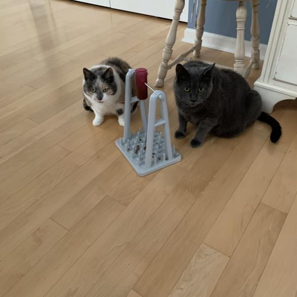 Freddie & Sadie