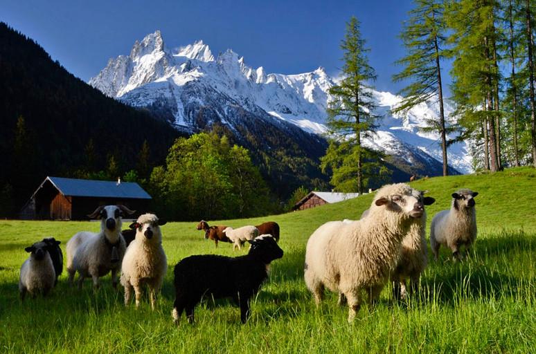 626064-0-la-joux-moutons.jpg
