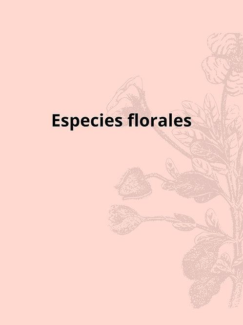 Guía de especies florales