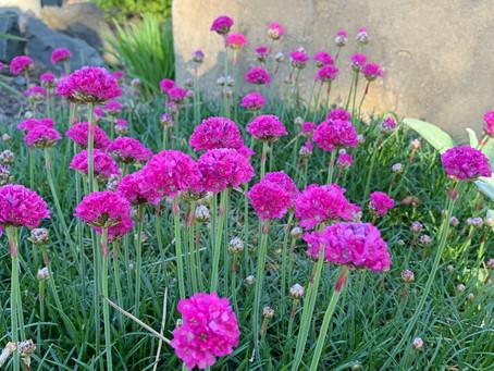 Quick plant & gardening lingo guide