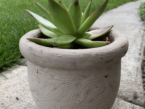 So what is the trick to SUCCULENTS?
