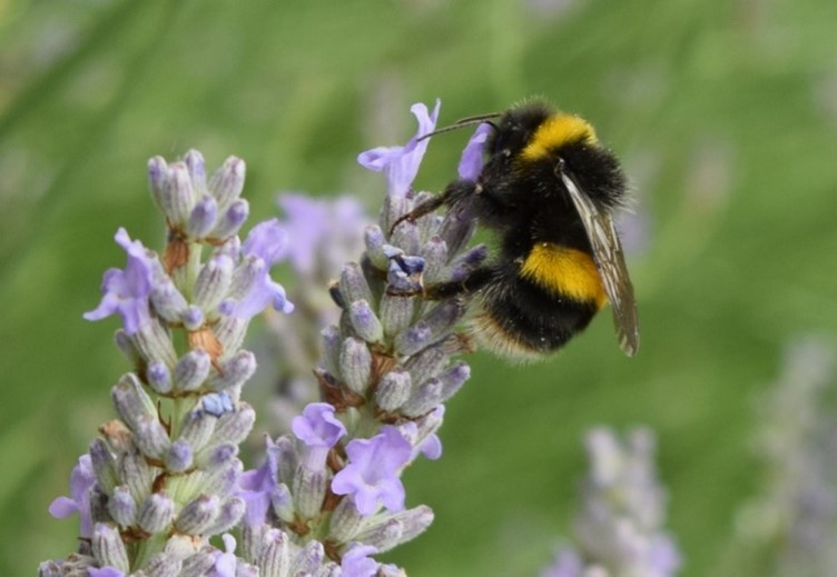 A bee in a flower