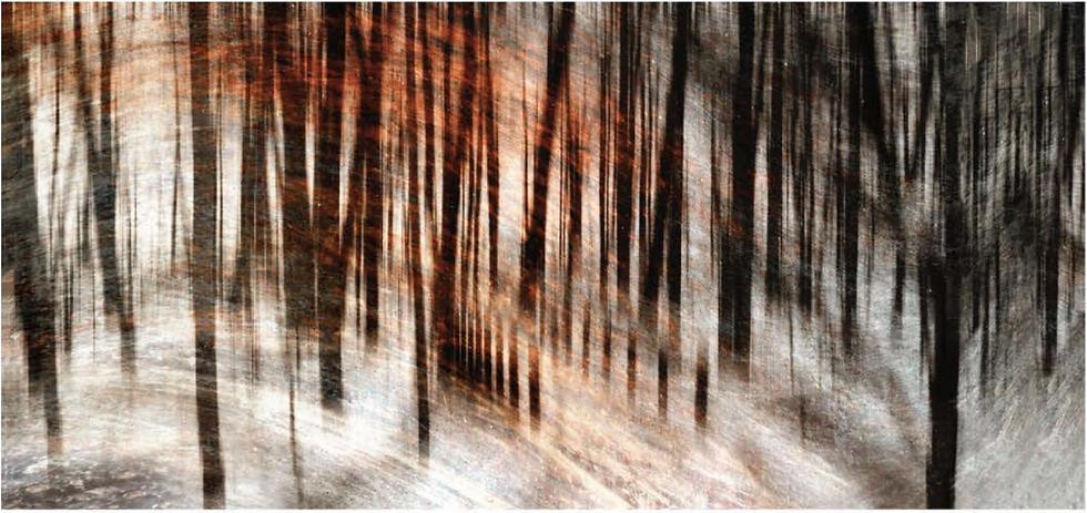 Hazy Woodlands