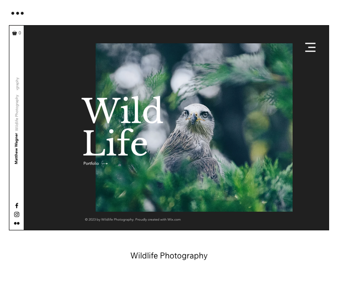 Wildlife Photography