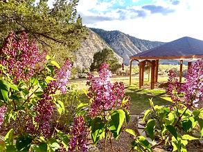 lilac monastery spring.jpeg
