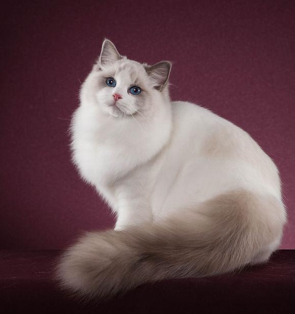 Kat (47 von 47).jpg