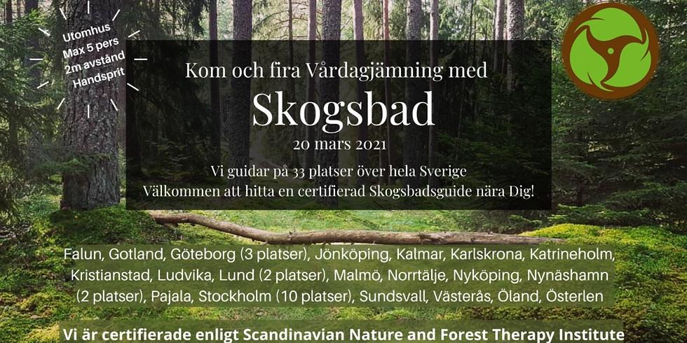 Fira Vårdagjämning med Skogsbad I Nackareservatet