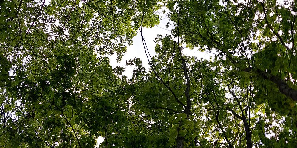 Skogsbad i sommarkväll