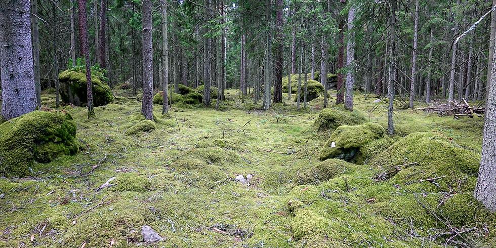 Skogsbad - naturkontakt för återhämtning eller bara som en härlig upplevelse i skogen