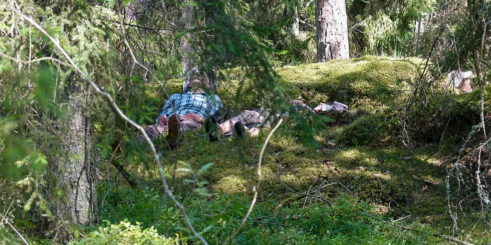 Skogsbad i din skog - guidat digitalt