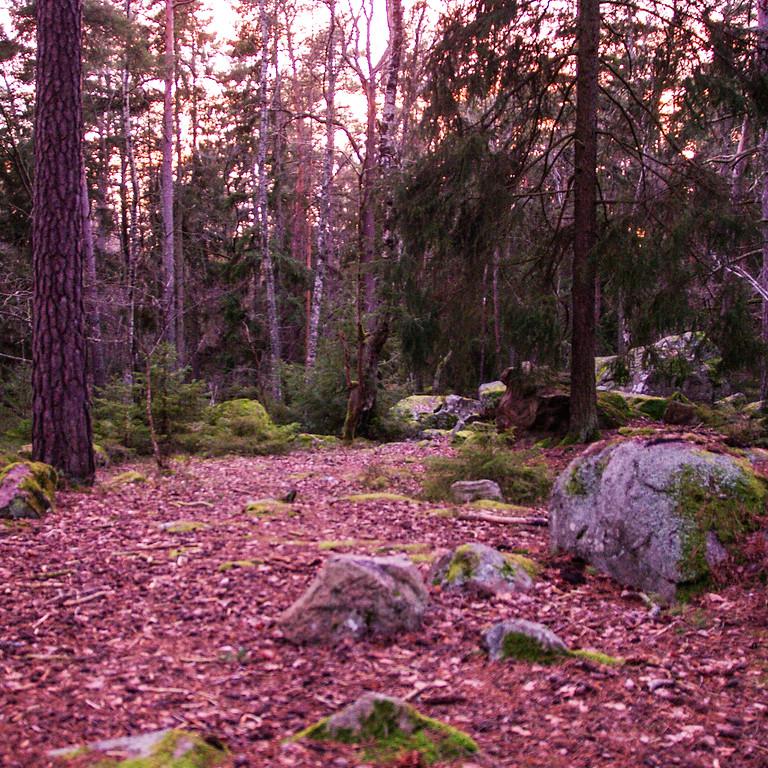 Guidad naturkontakt där du är - skogsbad med on-lineguidning