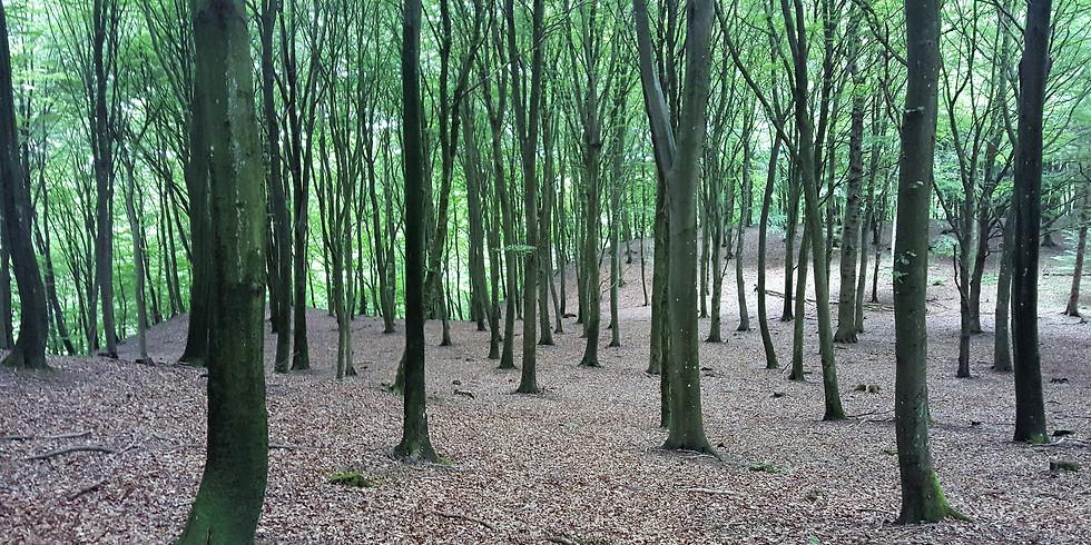Nytt skogsbad