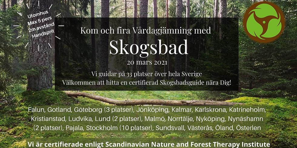 Södra Törnskogen, Sollentuna - Fira in Vårdagjämning med Skogsbad